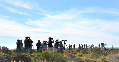 Vögel-Beobachtung an der Algarve bei Sagres