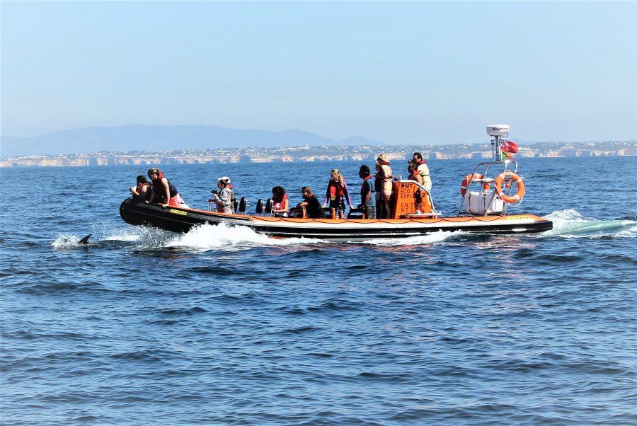 Speedboat mit Delfinen vor der Algarve-Küste