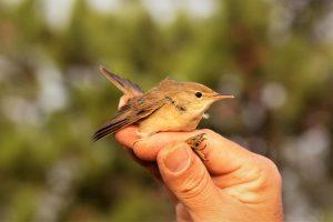Vogelbeobachtung an der Algarve bei Sagres im Oktober