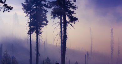 Verheerende Waldbrand-Bilanz 2017 in Portugal