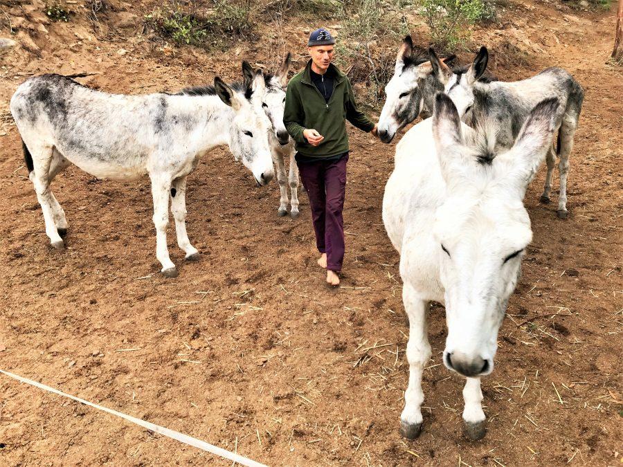 Eselwanderungen an der Algarve bietet Robert Nestmann