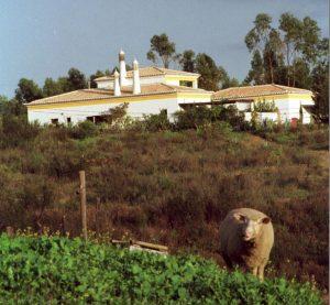 Grass Ausstellung an der Algarve ohne Foto vom Haus bei Portimao