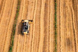Dürre schädigte Getreideproduktion in Portugal im Winter 2017/2018