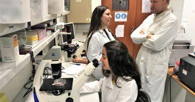 Krebs wird im Biomedizin-Labor der Universität der Algarve erforscht