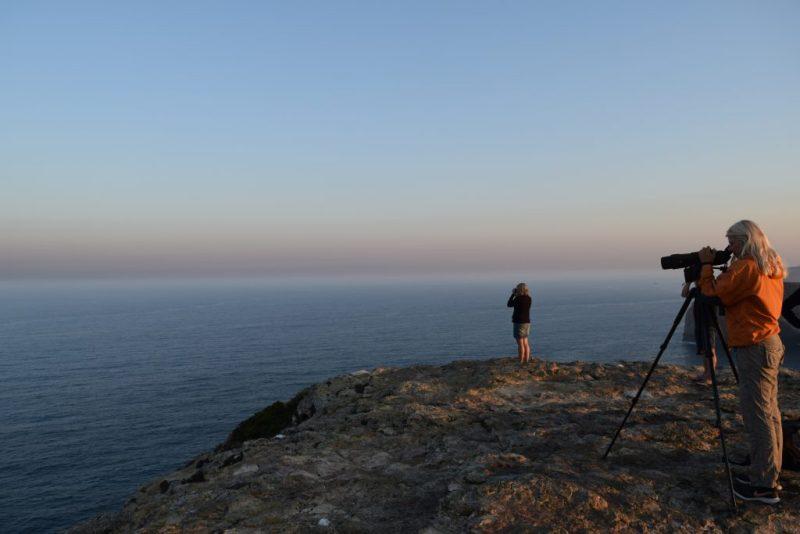 Vogelbeobachter an der Algarve widmen sich auch Tieren im Atlantik