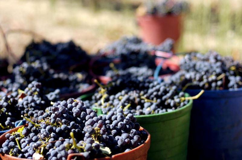 Algarve-Weine sind oft Spitzenprodukte mit Auszeichnung