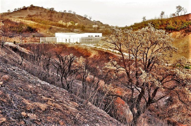 Iberischer Luchs in Aufzuchtstadtion von Silves an der Algarve durch Waldbrand bedroht