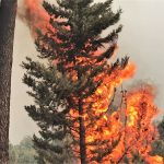 Algarve-Hotel von Waldbrand umzingelt