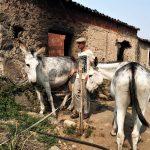 Monchique: Deutsche retten Esel-Flüsterer Robert