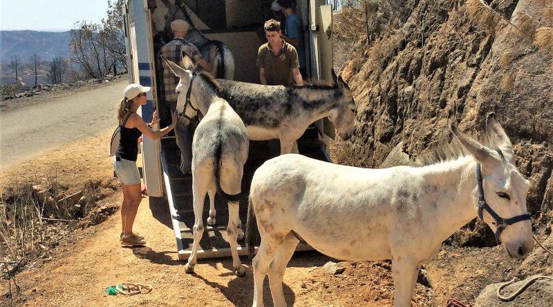 Rettung von Robert Nestmann und seinen fünf Eseln aus Monchique