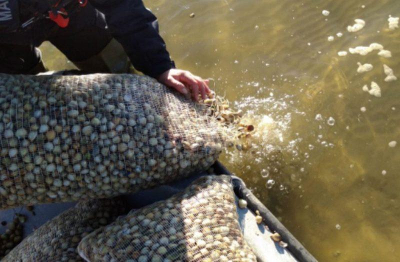 Algarve News zu illegalem Fang von Herzmuscheln in der Ria Formosa