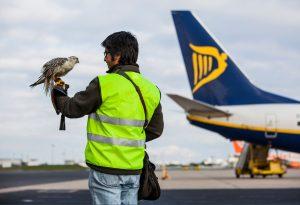 Flughafen Lissabon muss Umweltverträglichkeitsstudie für Montijo durchführen