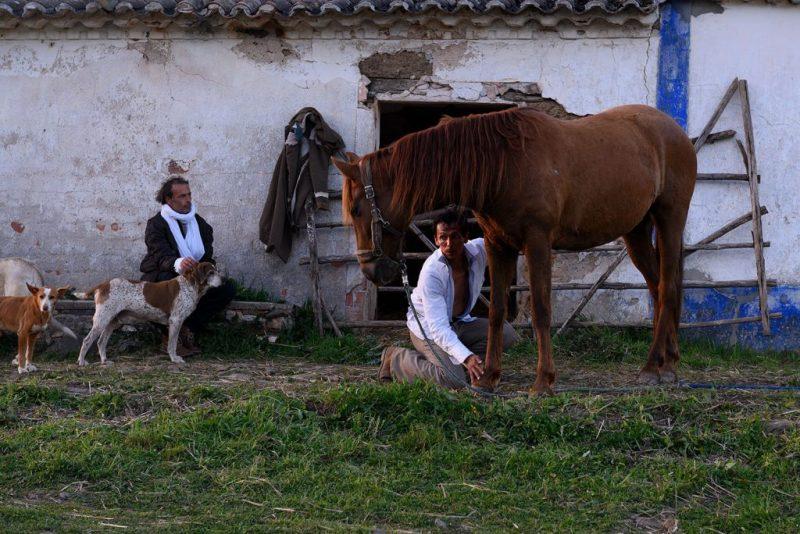 EvaPoro-Performance an der West-Algarve mit Pferd und Hunden