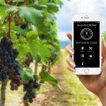 Algarve fördert Wein-Tourismus mit App