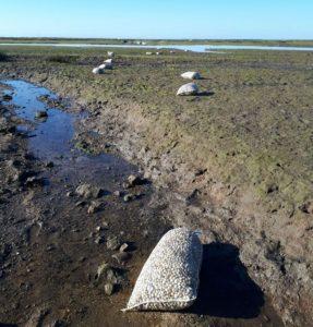 Algarve News zu illegaler Fischerei nach Herzmuscheln im Naturschutzgebiet Ria Formosa