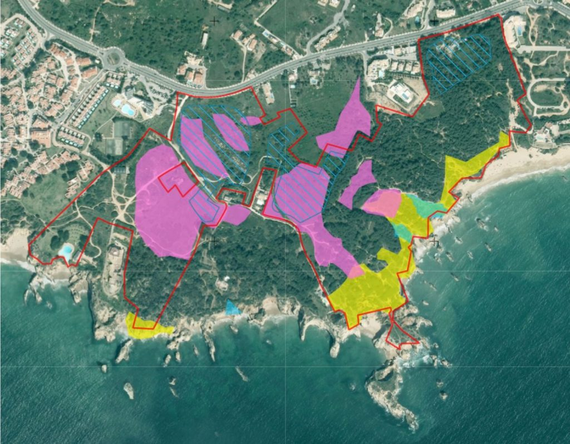 Hotel-Projekt an der West-Algarve bei Alvor scheitert an seltener geschützter Pflanze