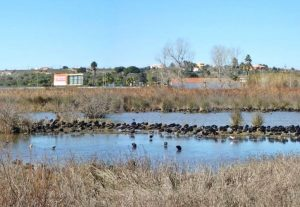 Feuchtgebiete an der Algarve wie Alagoas Brancas in Lagoa Thema von Studien