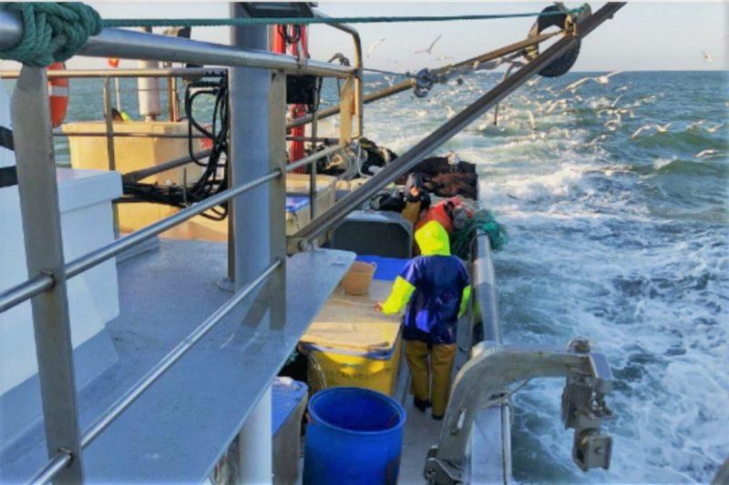 Algarve News zu Sardinenfang an der Ost-Algarve