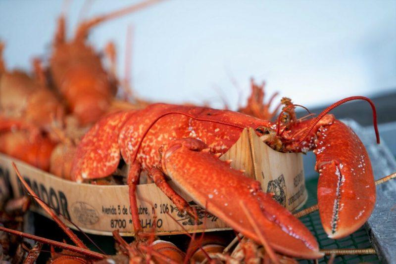 Algarve-Festivals mit Meeresfrüchten und Sardinen bieten auch Hummer an
