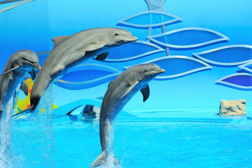 Delfinshows im Themenpark Zoomarine an der Algarve von Tierchützern kritisiert