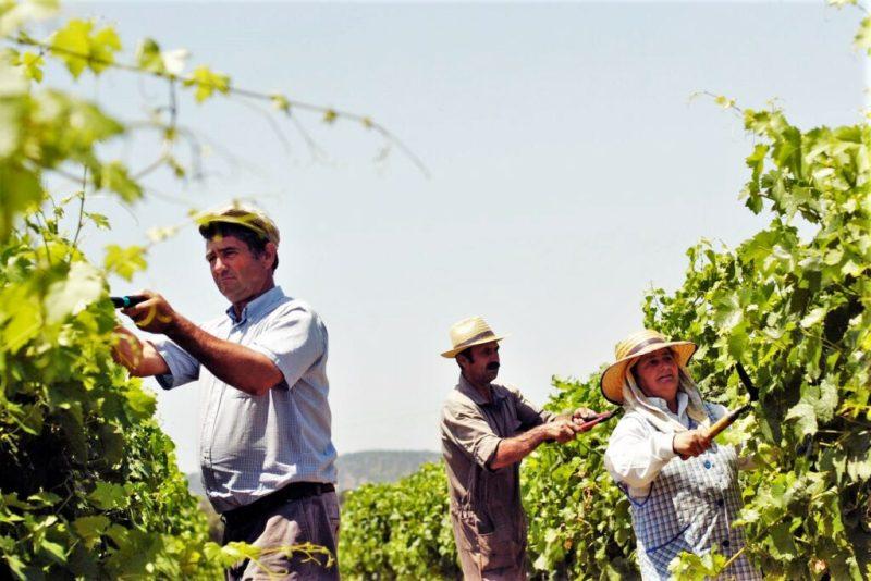 Jahrgang 2019 des Alentejo-Weins bringt höhere Erträge