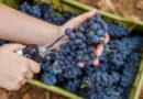 Wein: So wird der Jahrgang 2019 in Algarve und Alentejo