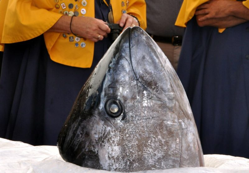 Thunfisch-Zerlegung in Olhao an der Ost-Algarve