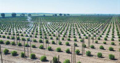 Algarve News über Freilandanbau von Cannabis für medizinische Zwecke